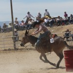 IMG 0960 150x150 Jake Clarks Mule Day by Bob Kisken